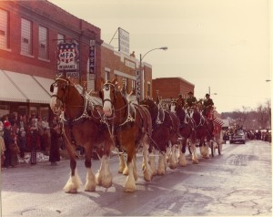 1975 Clydesdales in the St. Pats Parade