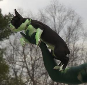 2006 Green Dog Photo