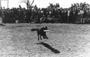 YEAR UNKNOWN Dog catching Frisbee
